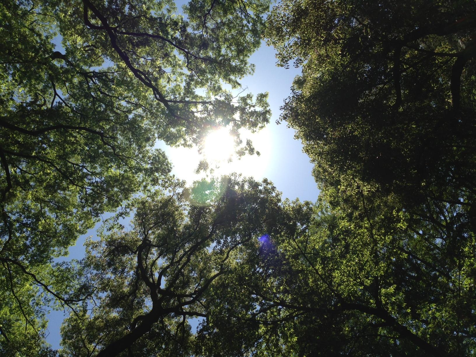 光が差し込む木々