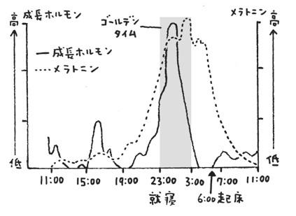 ホルモン分泌サイクルグラフ