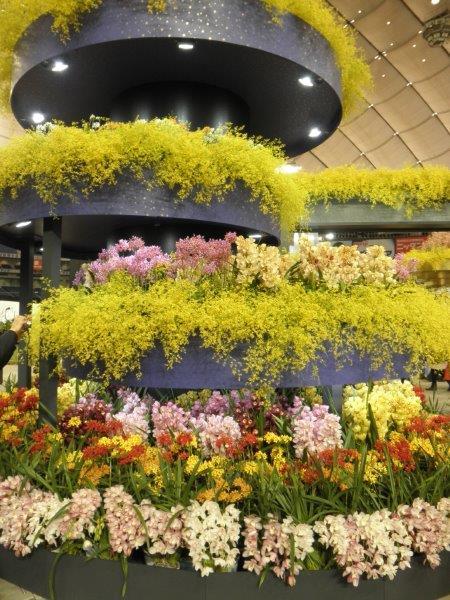 世界らん展 展示の胡蝶蘭