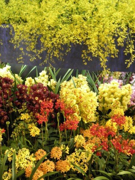 世界らん展 都会の真中の楽園 沢山の花