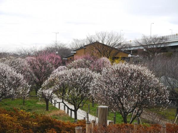 足立区 都市農業公園の風景