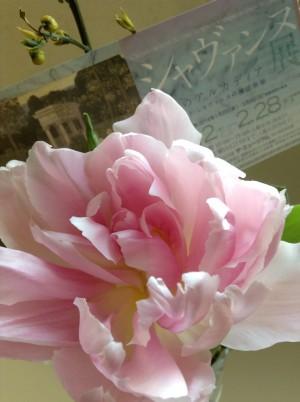 Bunkamura シャバンヌ展 パンフレットと花