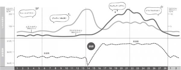 月経周期中のホルモンの動き、グラフ