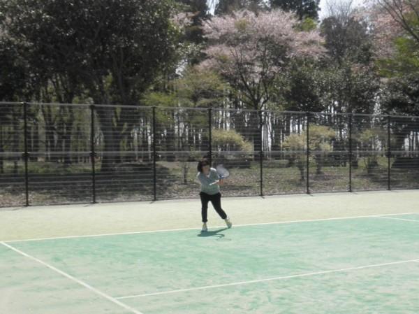 さくら市総合公園 テニスコート