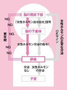 女性ホルモン分泌の図解