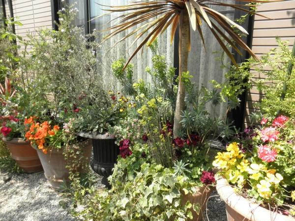 深谷花フェスタ 鉢に植えられた花々