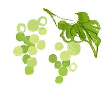 代表的なブレインフード・葡萄種子エキス