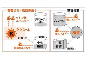 ケトジェニ ック・ダイエット脂肪が燃える仕組み図