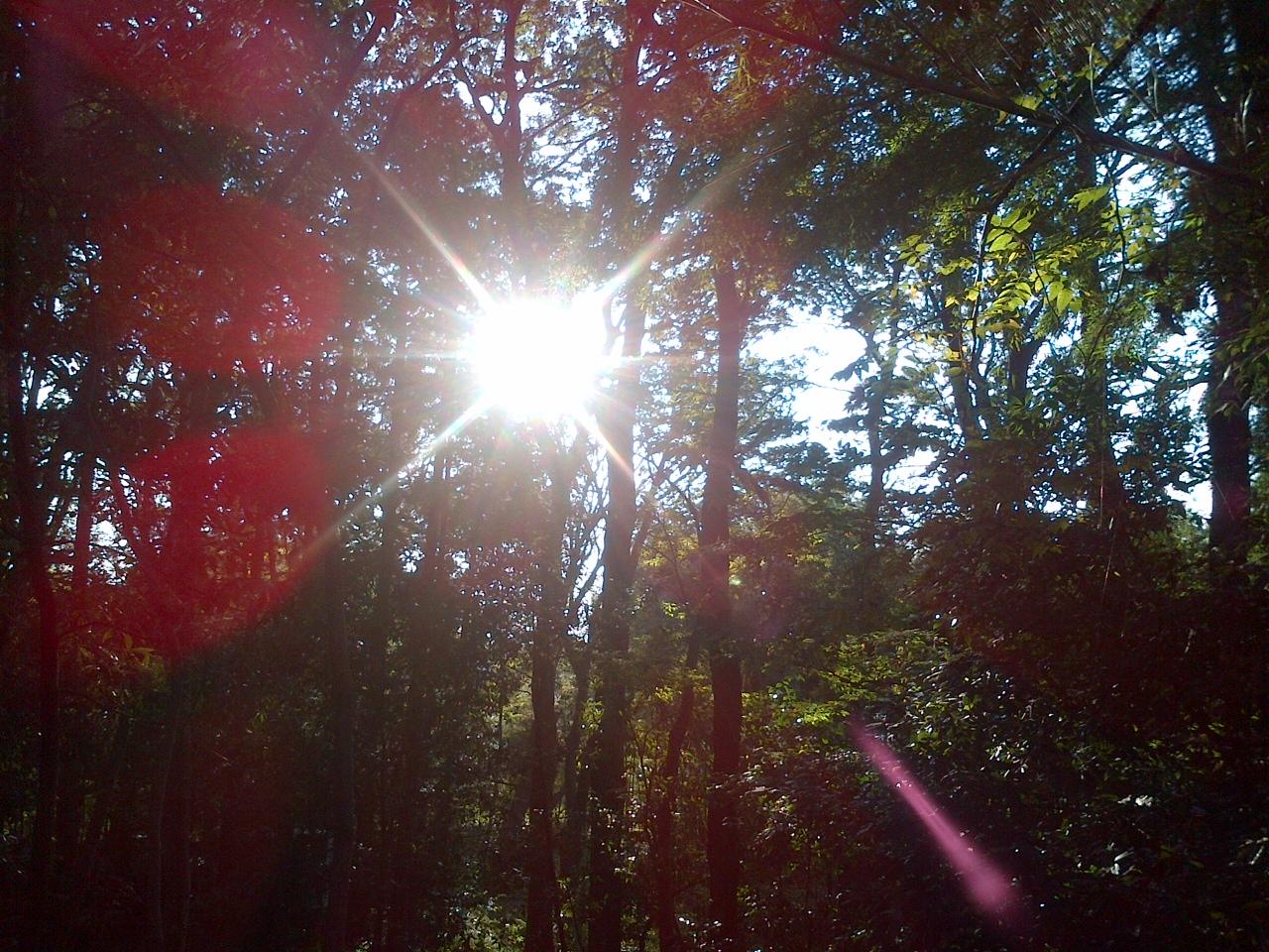 木立に差し込む光の写真