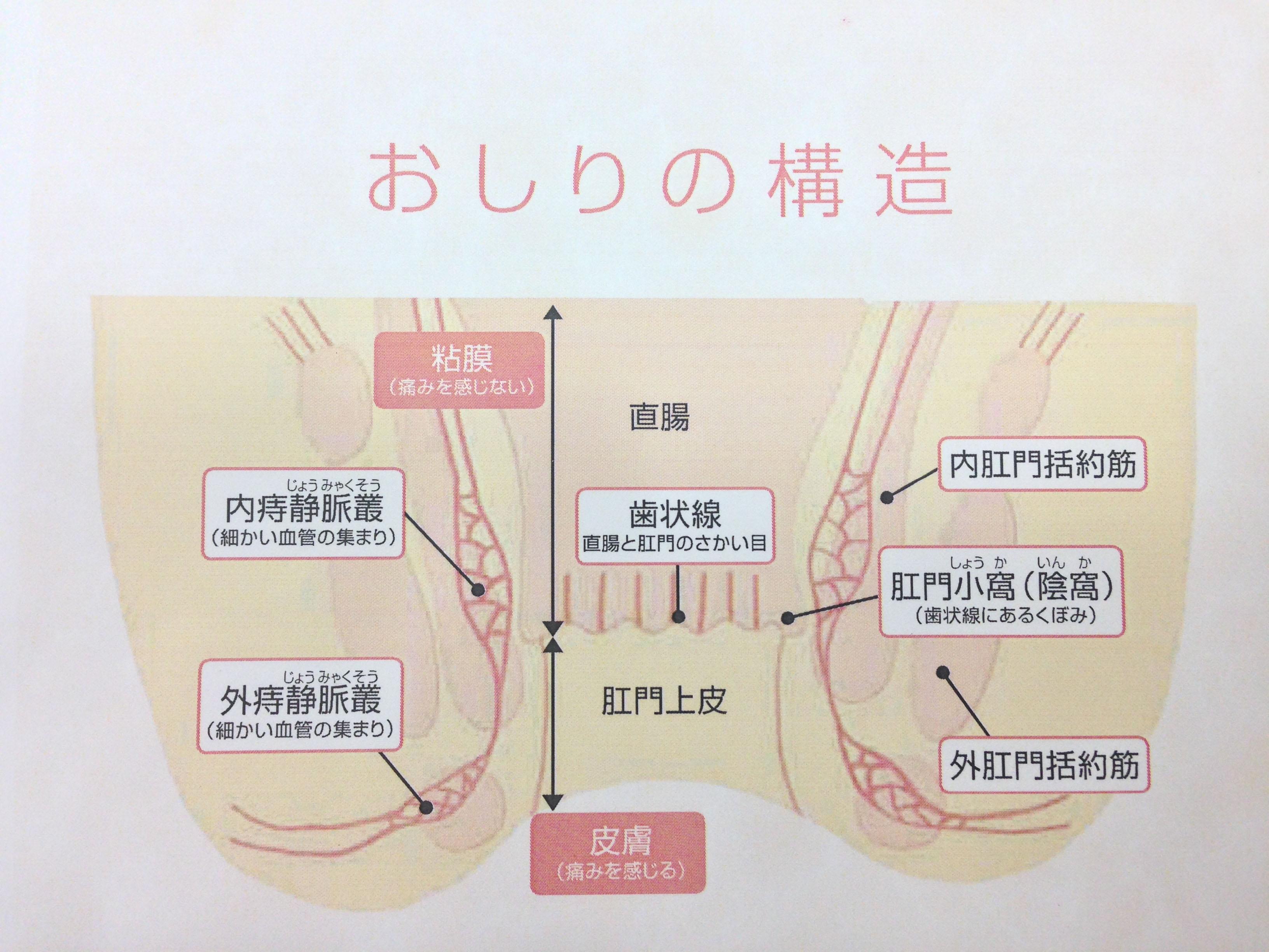 お尻セミナー_構造