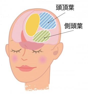 このページの脳のフォーカス部位は、触覚・空間・認知に関係する頭頂葉と、記憶・言語に関係する側頭葉