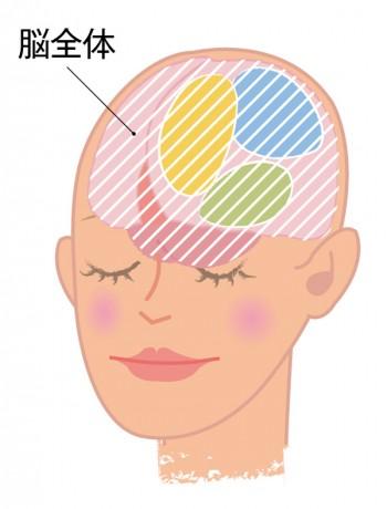 脳全体イメージ図