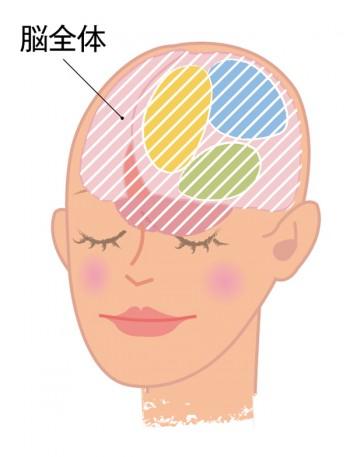 脳全体の図