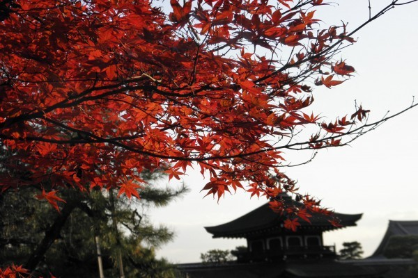 平安時代を想像させる雅な紅葉「平安神宮」の神苑