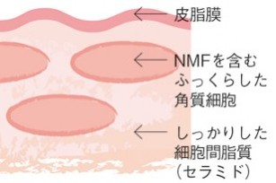 皮膚科医津田攝子先生に学ぶ、保湿の正しい知識とケアのポイント
