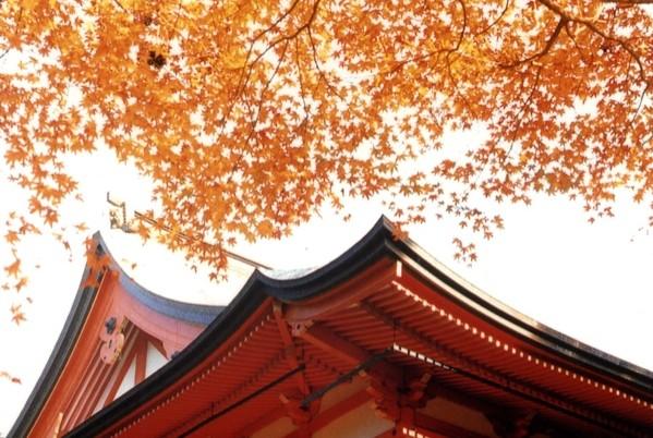 比叡山、延暦寺の紅葉と仏教文化を体験