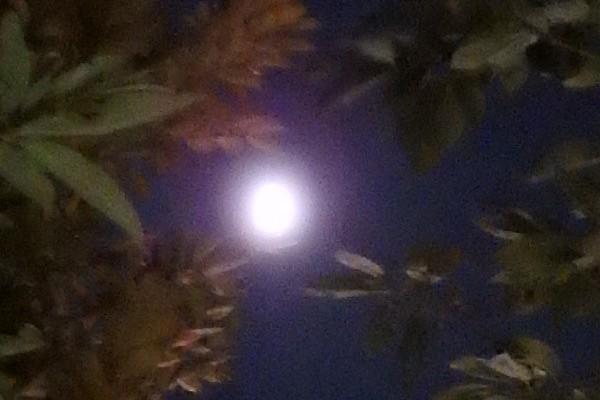 上野の「鴎外荘」で十三夜お月見の夜