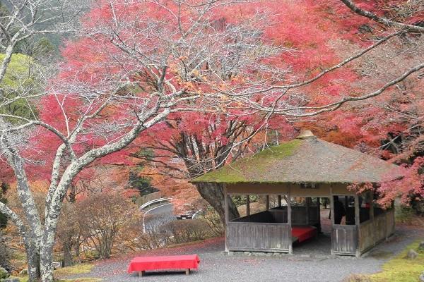 1日100名限定公開、雄大な山の紅葉が満喫できる「白龍園」