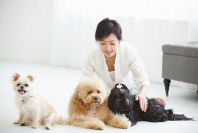 生い立ちも性格も違う4頭の犬たち。 「過去にどんな目にあっていても、犬たちは人間を信じています。その健気さに心打たれます。外でイヤなことがあって帰っても、犬たちの顔を見ると一瞬で忘れられる。犬って本当に不思議な力を持っているんです」(浅田さん)