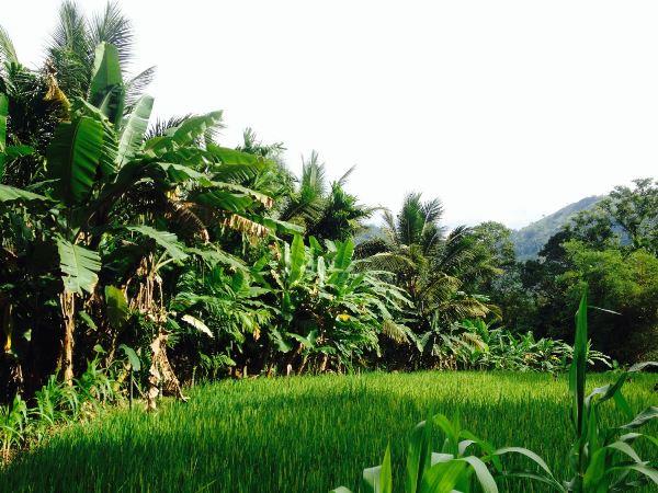 ayupiyasa_organicfarm