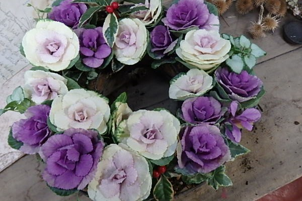 お正月の花ハボタンの寄せ植え教室に行ってきました。