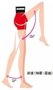 股関節の動き 前後