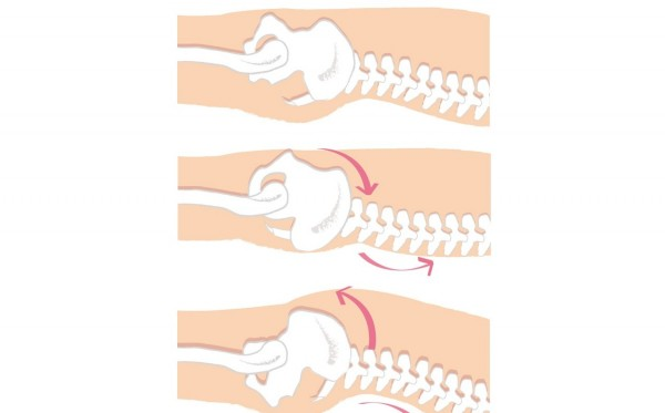 XOXOボディオロジーで股関節痛&腰痛予防⑤全身呼吸法をマスター STEP3