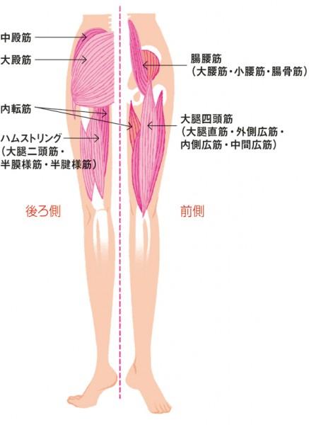 股関節を動かす筋肉