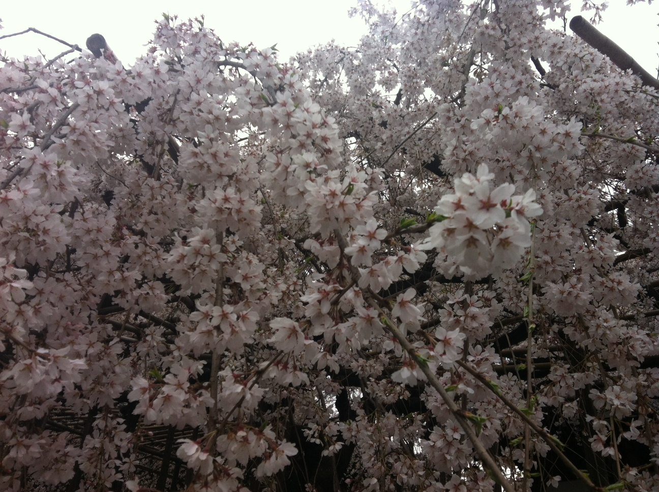 第25回「季節の変わり目の体の不調の悩み」