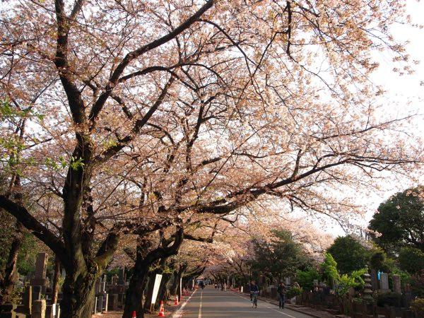 吉田谷中霊園