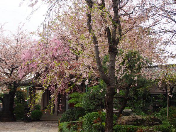吉田養福寺