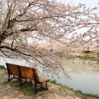 小暮弘前桜ベンチ