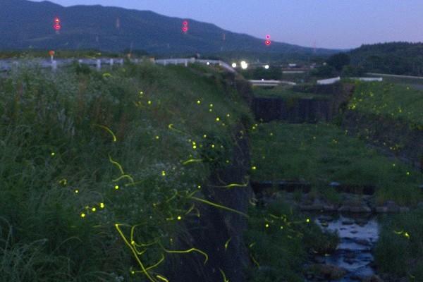 美しく光るプロポーズ。熊本でホタル観賞に