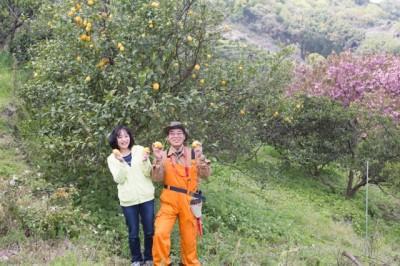 今村さん レモン農家ご夫婦