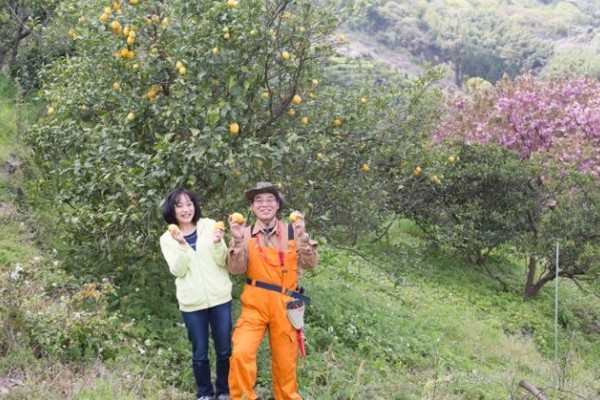 """レモン農家さんを支援!! """"恋するレモネード・プロジェクト"""""""