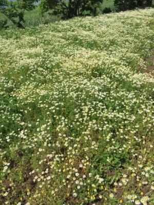 樫出さん2 花畑