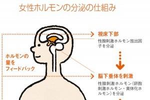 ホルモンは脳に支配されている!/Dr.根来の体内向上プロジェクト