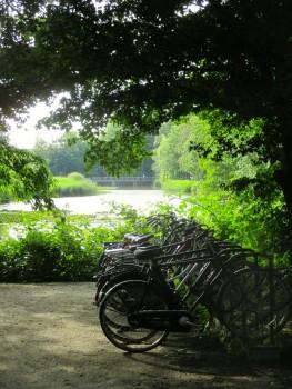井原さん 緑の中の自転車