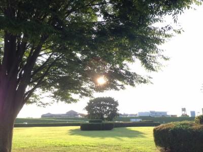 樫出さん 陽の光