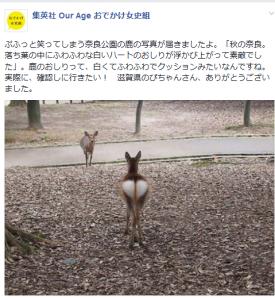 投稿・奈良公園の鹿