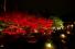 京都の奥座敷のような寺で、 移り行く季節を愛でる/雲龍院後編