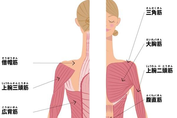 「筋トレ」の正しい知識 vs.間違った知識 Q&A/「筋肉」の基礎知識①