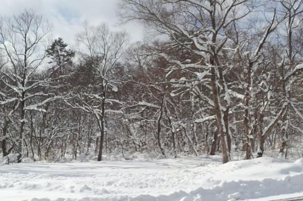 女ひとりのスキー旅 星野リゾート裏磐梯猫魔スキー場