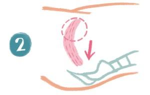 尿を途中で止めるように(注:実際に排尿している最中は尿を止めないこと)、尿道や膣を締めます。骨盤底筋を、上(お腹側)から下(お尻側)へ
