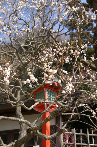 鎌倉の花_前1