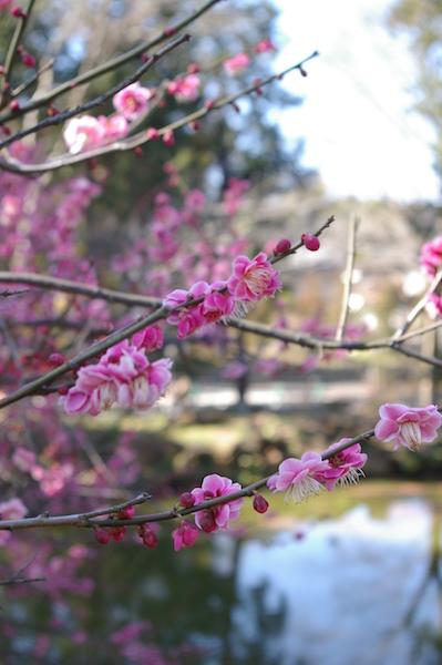 鎌倉の花_前3