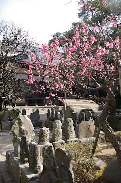 鎌倉の花_前4
