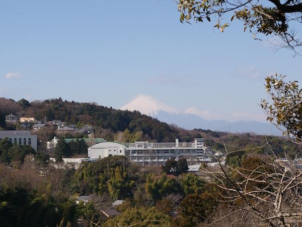 鎌倉の花_前5