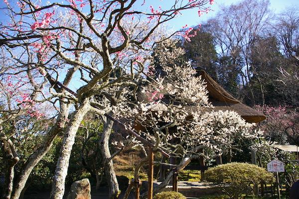 鎌倉の花_前6