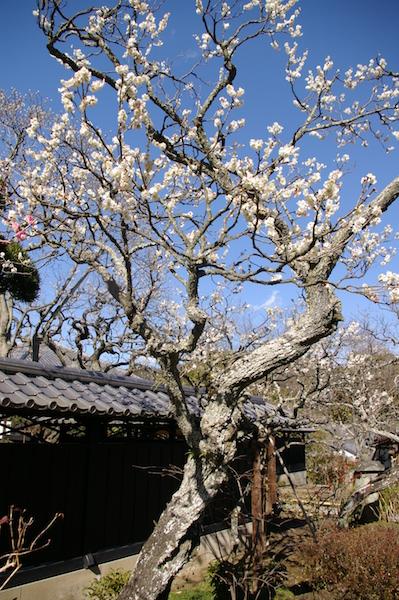 鎌倉の花_前7